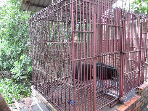 Hong Bear Farm in Vietnam's Quang Ninh province