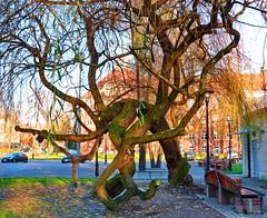 Dancing Tree - Rybnik, Polska (24.11.2015)