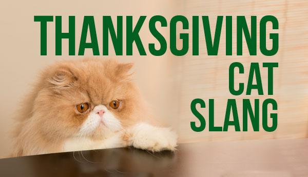 thanksgiving-cat-slang