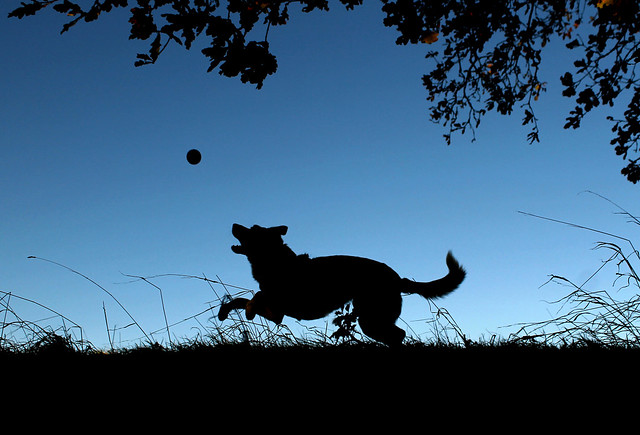 48/52 Flynn, In Silhouette, Canon EOS 1100D, Canon EF-S 18-55mm f/3.5-5.6 III
