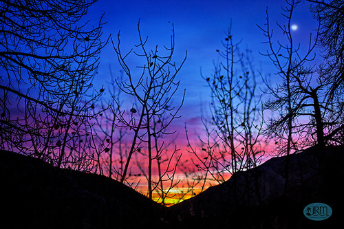 mtcharleston predawn sunrise skyward tree silhouettes lasvegas scenic