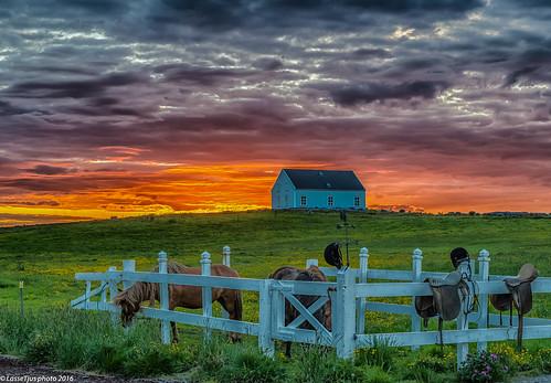 y2013 island norðurlandeystra is iceland sunset midnightsun icelandic horses house