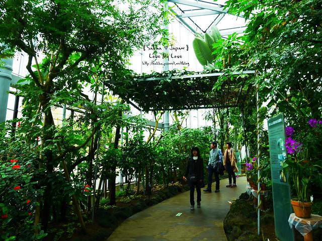 日本東京景點新宿御苑溫室植物 (26)