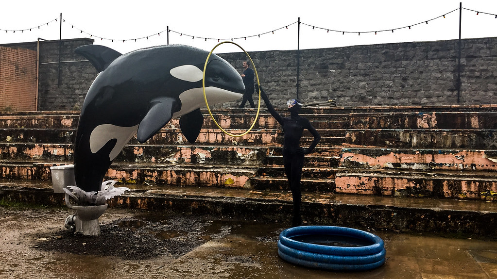 "We force animals to perform impossible ""tricks."" 