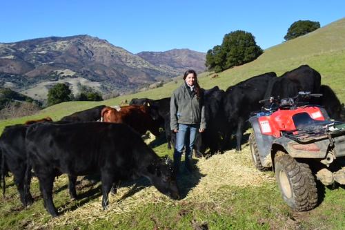 Carissa Koopmann Rivers with grazing cattle on Mount Diablo