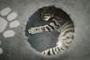 Circular cat by xisidoro