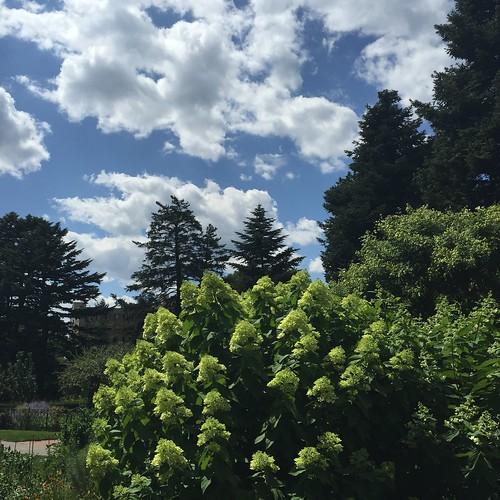 New York Botanical Garden Sky & Trees