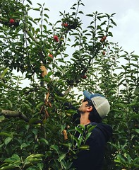 Using height to our advantage. Picking apples at Gizdich Ranch.