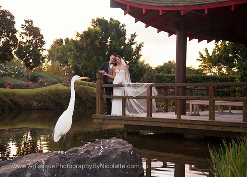 Bride and Groom at Hunter Valley Gardens.