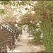 Tree Vine Street