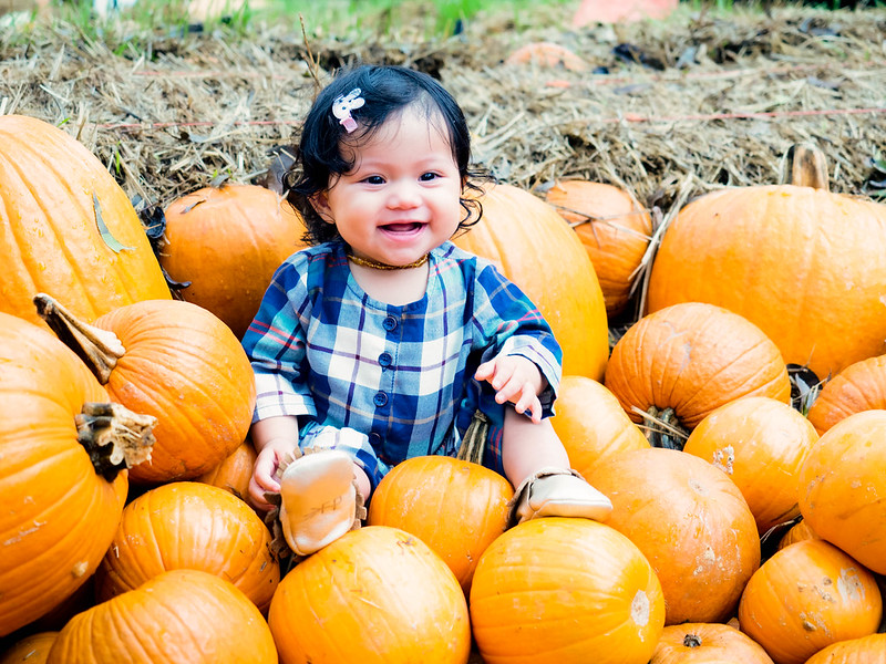 cute & little blog | baby girl pumpkin patch