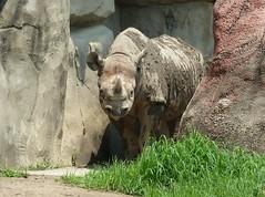 Brookfield Zoo 2017-2015