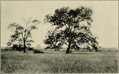 "Image from page 332 of ""Economic botany of Alabama"" (1913-1928.)"