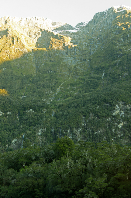Mountain, long waterfall & stunted forest from Milford Sound Lodge 21 7 15 K55675 - 650