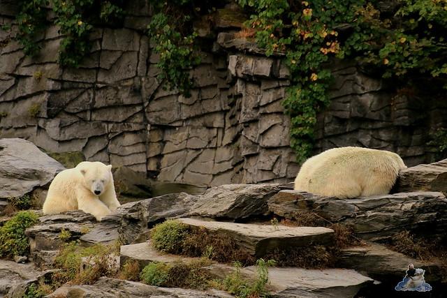 Tierpark Berlin 16.08.2015  02