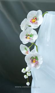 """Орхидея фаленопсис или """"свадебна орхидея"""""""
