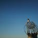 Burning Man 2015 by spieri_sf