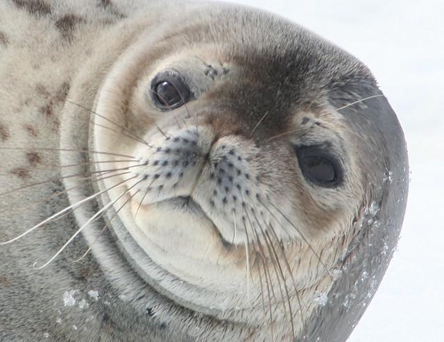Antarctica 2006 (8)