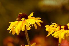 Bees and buds at the (Royal) Botanical Gardens