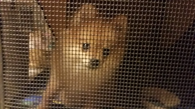 Solitary Confinement Pom