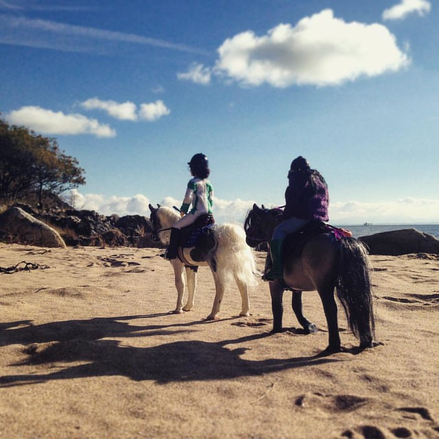 Beach Ride.  #julip #juliporiginals #modelhorses #beach #horse