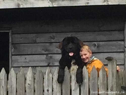 Wed, Sep 23rd, 2015 Lost Female Dog - Drumany Line, Killargue, Leitrim