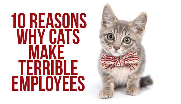 cats-make-terrible-employees