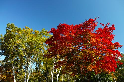 クラーク食堂前の紅葉(PLフィルター)