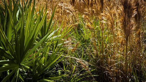 grass us unitedstates florida fl palmettos kenansville prairielakeswma
