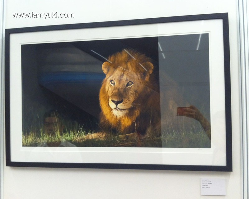 Mandala Wildlife Art Exhibitionlion 12
