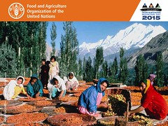 December 11 is International Mountain Day 2015 @FAOForestry @FAOnews #MountainsMatter