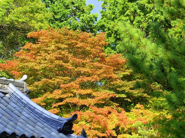 A spot of colour, Toshodaiji Temple