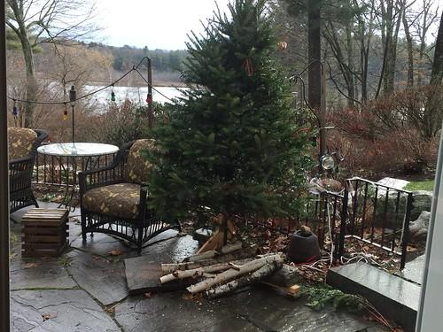 outdoor christmas tree IMG_4339