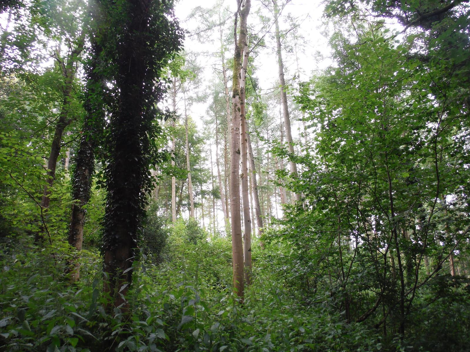 Fonthill Abbey Wood SWC Walk 248 Tisbury Circular via Hindon