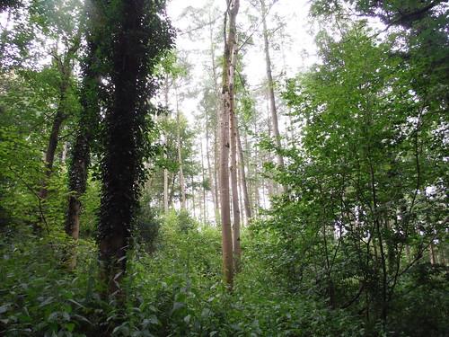Fonthill Abbey Wood