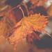 Rainy Autumn Morning