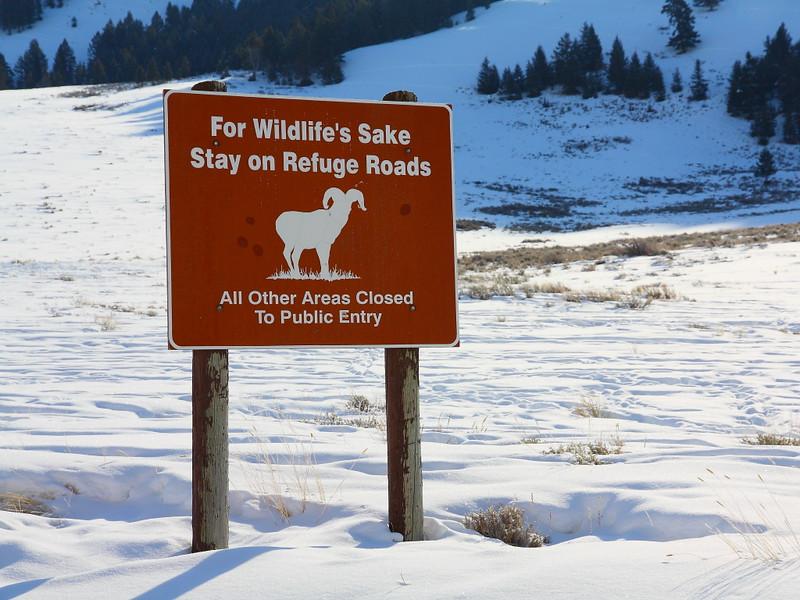 IMG_9326 National Elk Refuge