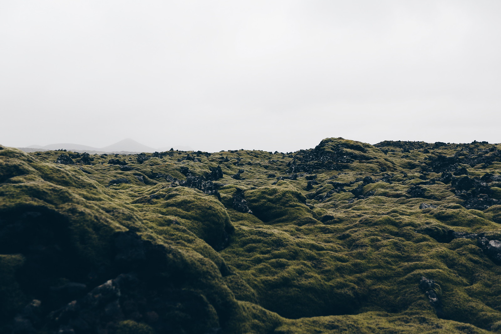 #iceland #moss #lavafields