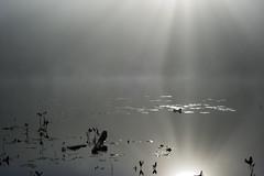 O'lac Genin