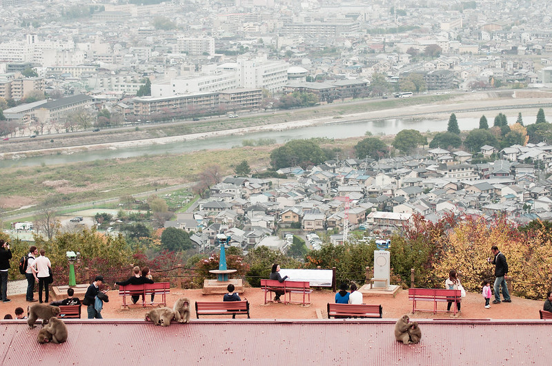 モンキーパークいわたやま,京都,嵐山,猿
