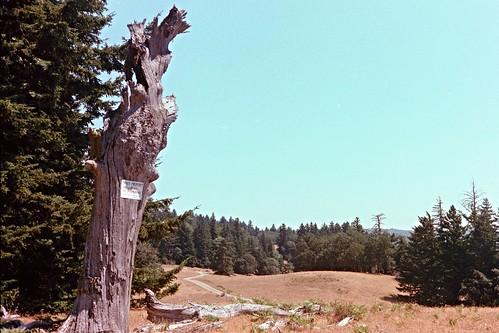Kerrydale Ranch-8