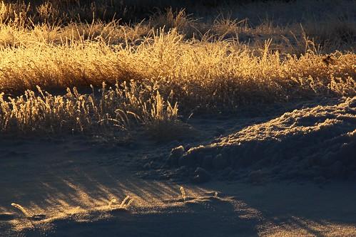 morning winter light sun snow grass sunrise dawn morninglight frost hoarfrost meadow beautifullight 100v10f eastkootenay