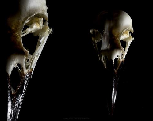Bird skull // 24 11 15