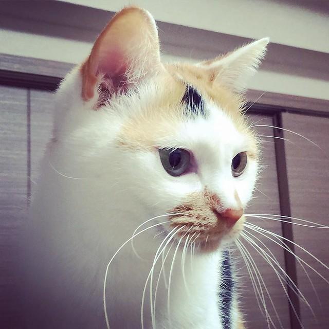 #cat #猫 #ねこ 😺😺😺