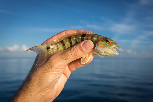 A Merry Fishmas 2015