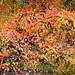 Autumn 2/3 by Sir Cam @camdiary