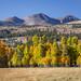 Eastern Sierra Fall Colors 2016 by Jeffrey Sullivan
