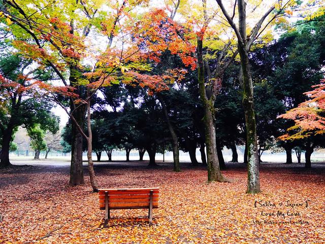 日本東京景點澀谷區代代木公園賞楓葉 (11)