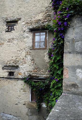 Vivieros, Spain: Blue Trumpet Vine Against a Stone Wall