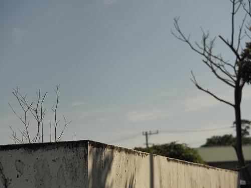 屋根に生える樹